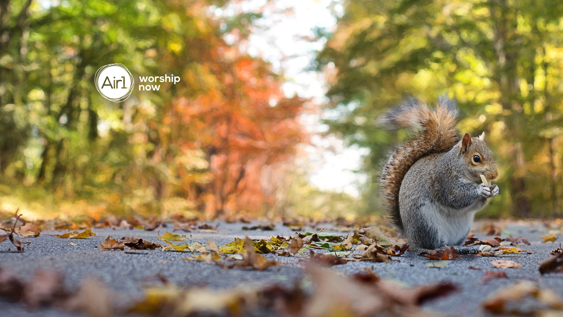 Squirrel Background For Zoom Calls On Thanksgiving