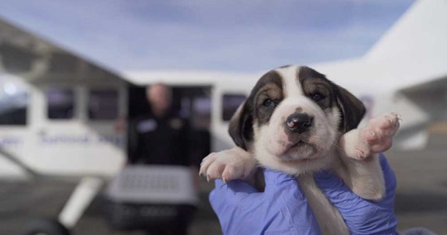 Person holds puppy up to camera outside airplane