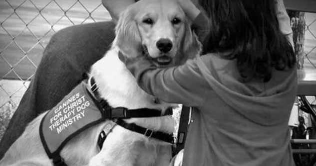 b/w photo of golden retriever therapy dog