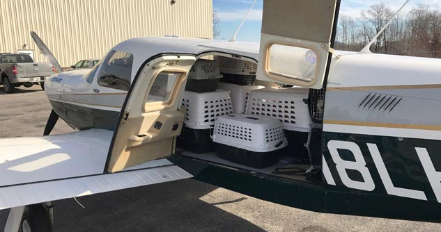Pet carriers loaded on plane on tarmac